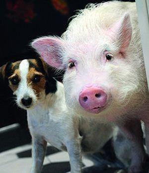 tierisch-verknallt-schwein-hund-300-400-Hardy-Spitz-SAT1