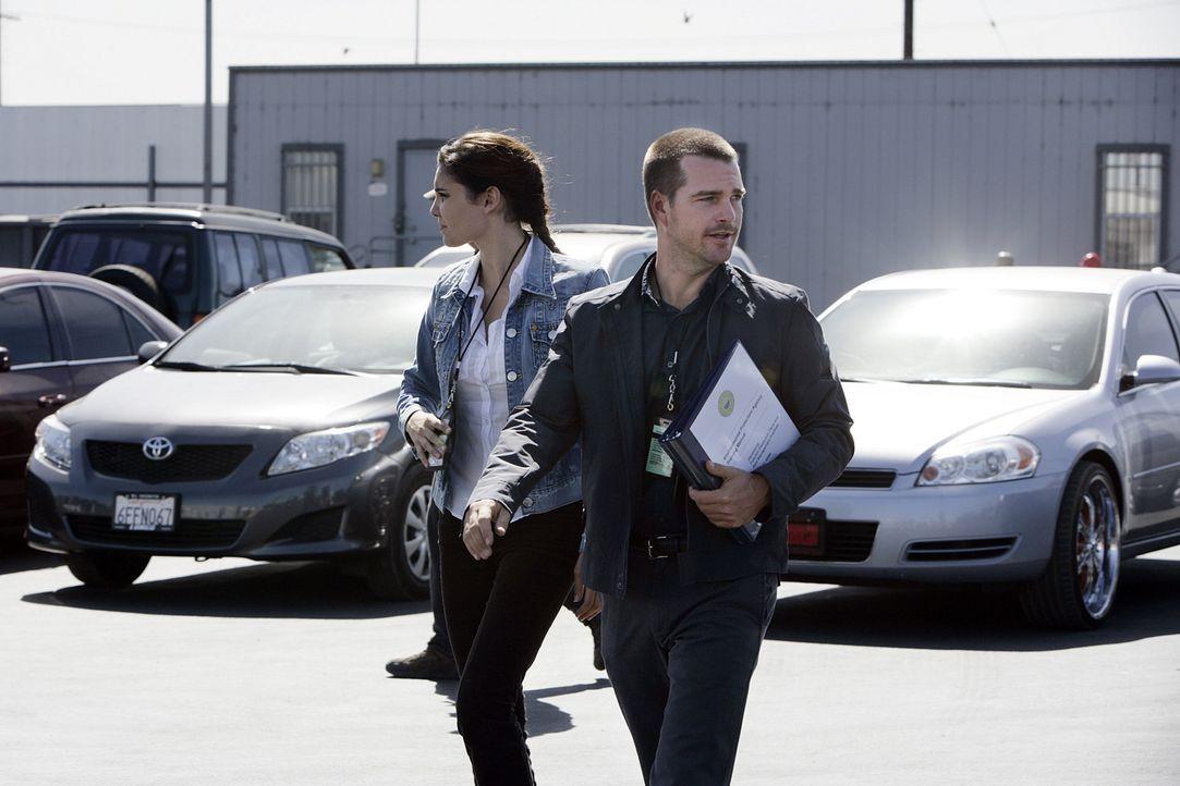 Undercover ermitteln Special Agent G. Callen (Chris O'Donnell, r.) und Special Agent Kensi Blye (Daniela Ruah, l.) in einem neuen Mordfall ... - Bildquelle: CBS Studios Inc. All Rights Reserved.