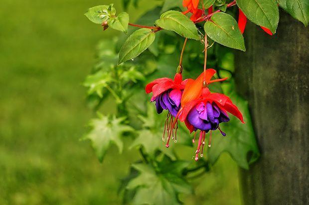 160513_Sommerpflanze_Bildergalerie_b7_Pixabay - Bildquelle: Pixabay