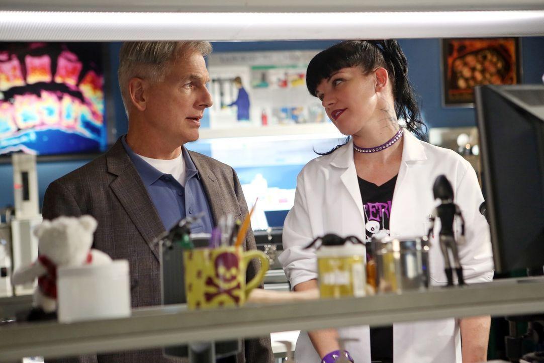Ermitteln in einem neuen Fall: Gibbs (Mark Harmon, l.) und Abby (Pauley Perrette, r.) ... - Bildquelle: CBS Television