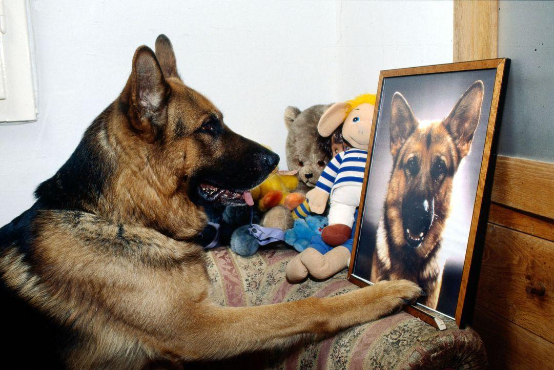Rex ist stolz: Moser hat ein Porträt von ihm gerahmt! - Bildquelle: Sat.1