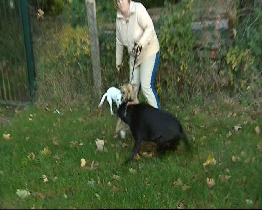 Stefanie ist Hundetherapeutin und hilft verzweifelten Hundebesitzern. Ohne Gewalt und Sprache therapiert sie selbst die schwierigsten Fälle ... - Bildquelle: SAT.1 Gold