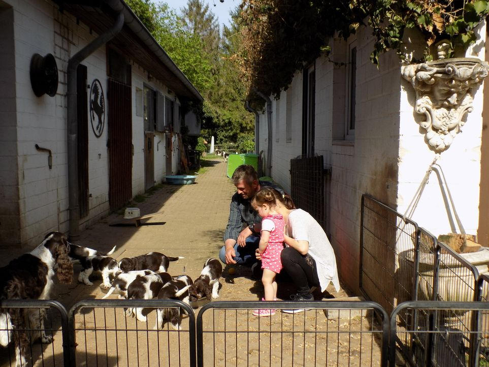 Gemeinsam mit Hundeexperte Dirk Lenzen (l.) schaut sich Familie Zieglerski bei einem Züchter Australian Shepherd Welpen an. Doch werden sie sich für... - Bildquelle: SAT.1