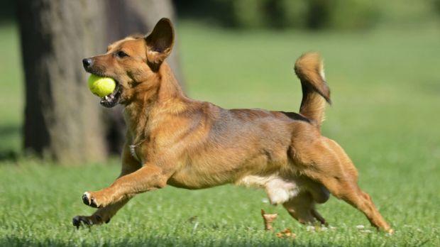 Pets Online Schauen