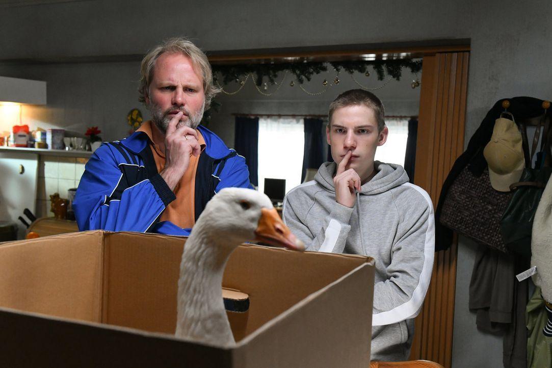 Haben einen Plan: Mike (Mirco Reseg, l.) und sein Sohn Basti (Lennart Borchert, r.) ... - Bildquelle: Claudius Pflug SAT.1/Claudius Pflug