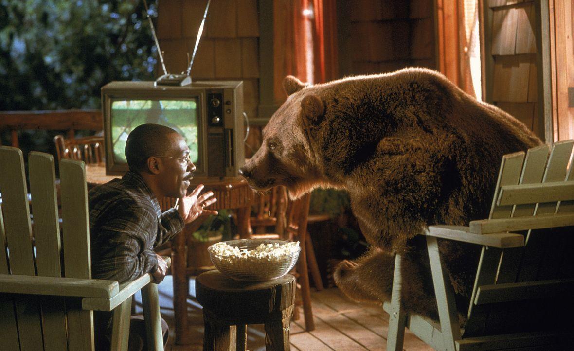 Gemütlicher Fernsehabend: Dr. Dolittle (Eddie Murphy) genießt die Gesellschaft von Archie, einem Zirkusbären, der gern witzige Sprüche klopft und Fa... - Bildquelle: 1998 Twentieth Century Fox Film Corporation. All rights reserved.