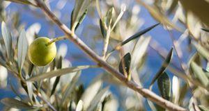 Gartengestaltung_2016_04_06_Laubbäume bestimmen_Bild 4_pixabay