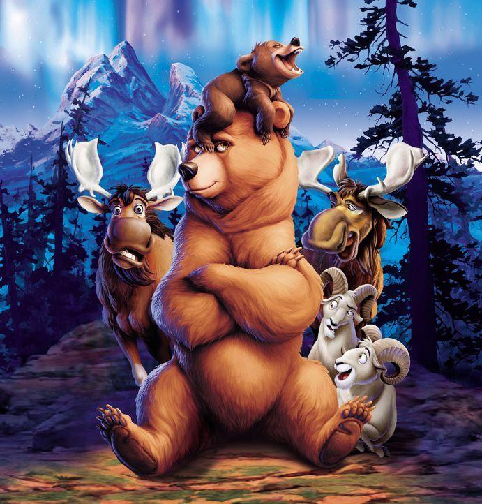 Der kleine Grizzly Koda (oben), sowie die Elche Benny (r.) und Björn (l.) wissen nicht, dass der Bär Kenai (M.) einmal ein Mensch gewesen ist. - Bildquelle: Buena Vista Pictures Distribution. All Rights Reserved.