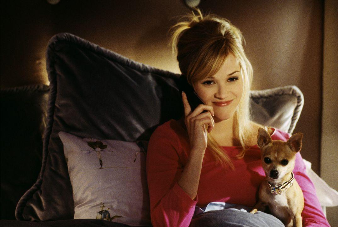 Elle (Reese Witherspoon) kann es nicht glauben: Die Mama von Brutus wird ganz legal in einer Tierversuchsanstalt gefangen gehalten! Mit Hilfe ihrer... - Bildquelle: Metro-Goldwyn-Mayer (MGM)
