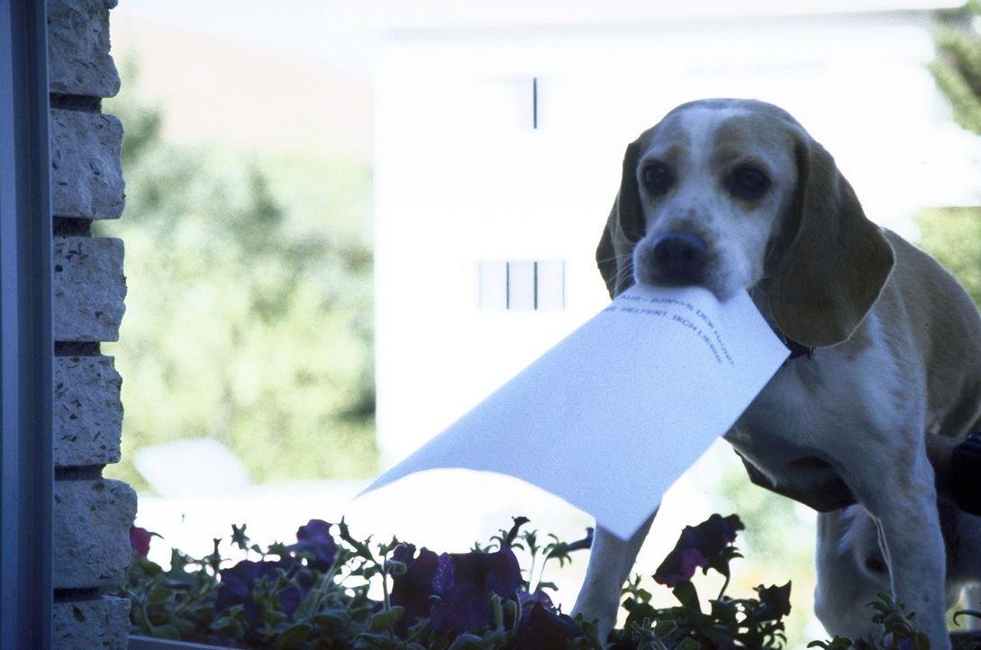 """""""Hier dürfen wir nicht rein!"""": Klaus-der-Hund will um jeden Preis seinen Prozess gewinnen, deshalb versucht er verzweifelt, mit dem Ergebnis des Ge... - Bildquelle: Boris Guderjahn ProSieben"""