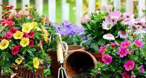 Ideen für die Balkongestaltung dürfen ruhig bunt sein: Petunien bringen Farbe...