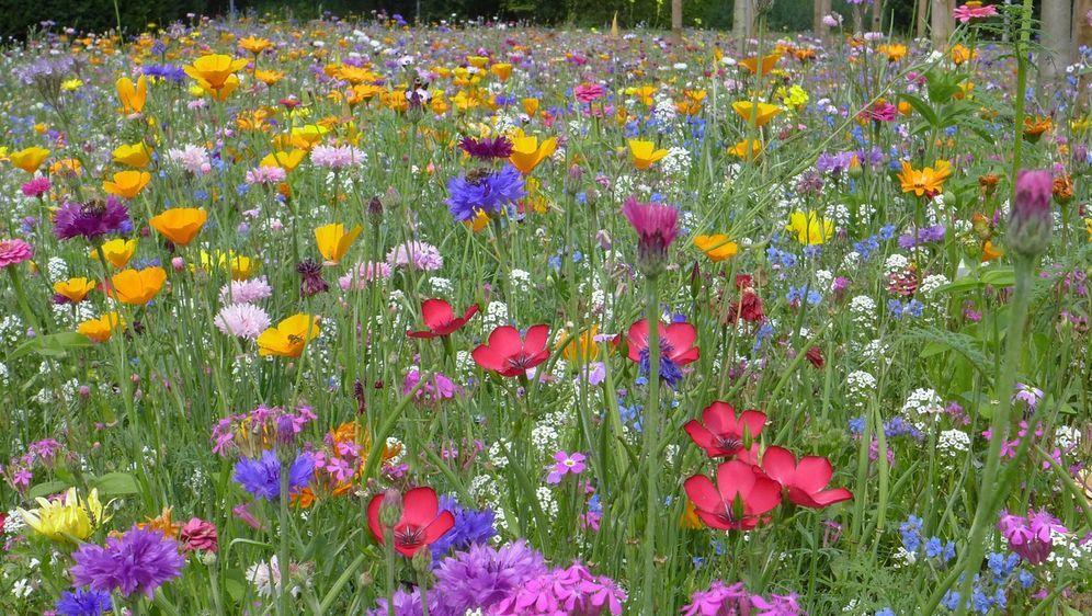 Blumenwiese Anlegen Tipps Für Ein Schönes Blütenmeer Sat1