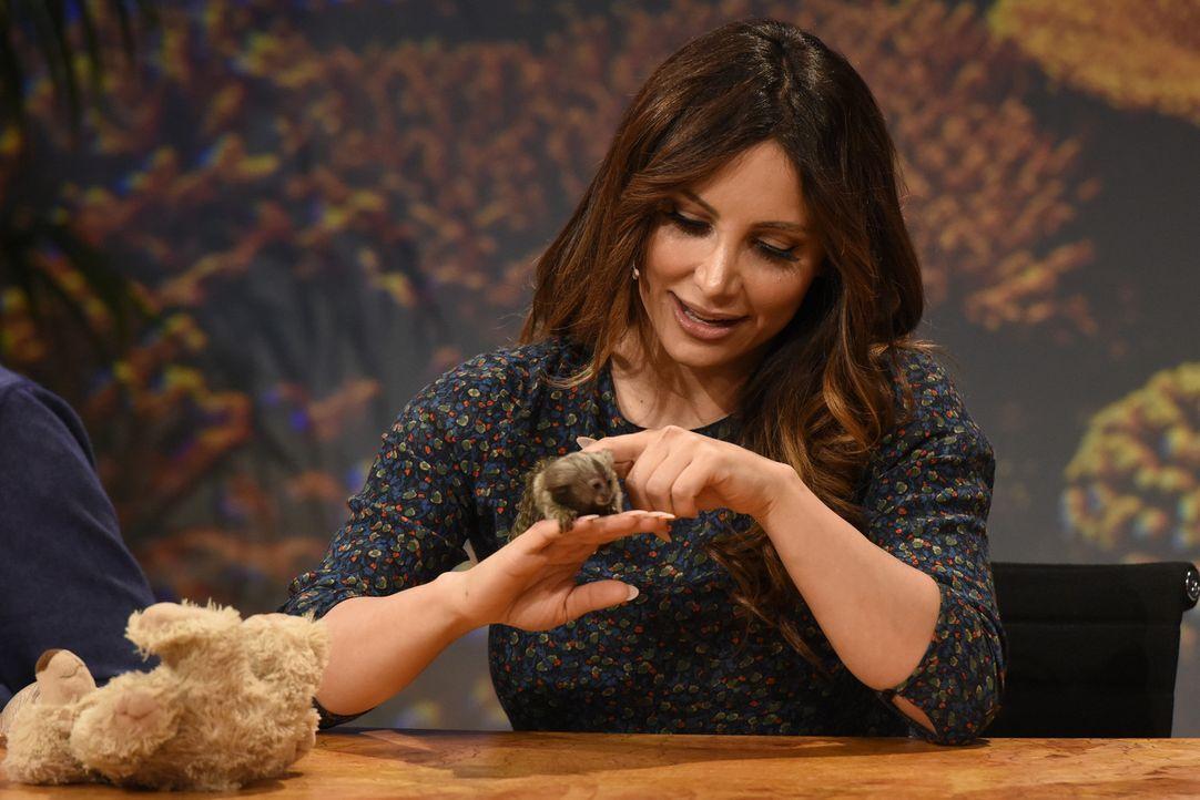 Enissa Amani freundet sich mit dem kleinen Äffchen an, aber kennt sie sich auch mit dieser Tierart aus? - Bildquelle: Martin Rottenkolber SAT.1