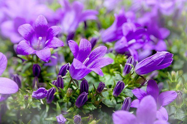 160513_Sommerpflanze_Bildergalerie_b8_Pixabay - Bildquelle: Pixabay