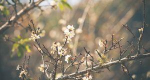 Gartengestaltung_2016_02_29_Pfirsichbaum schneiden_Bild 1_fotolia_wittybear