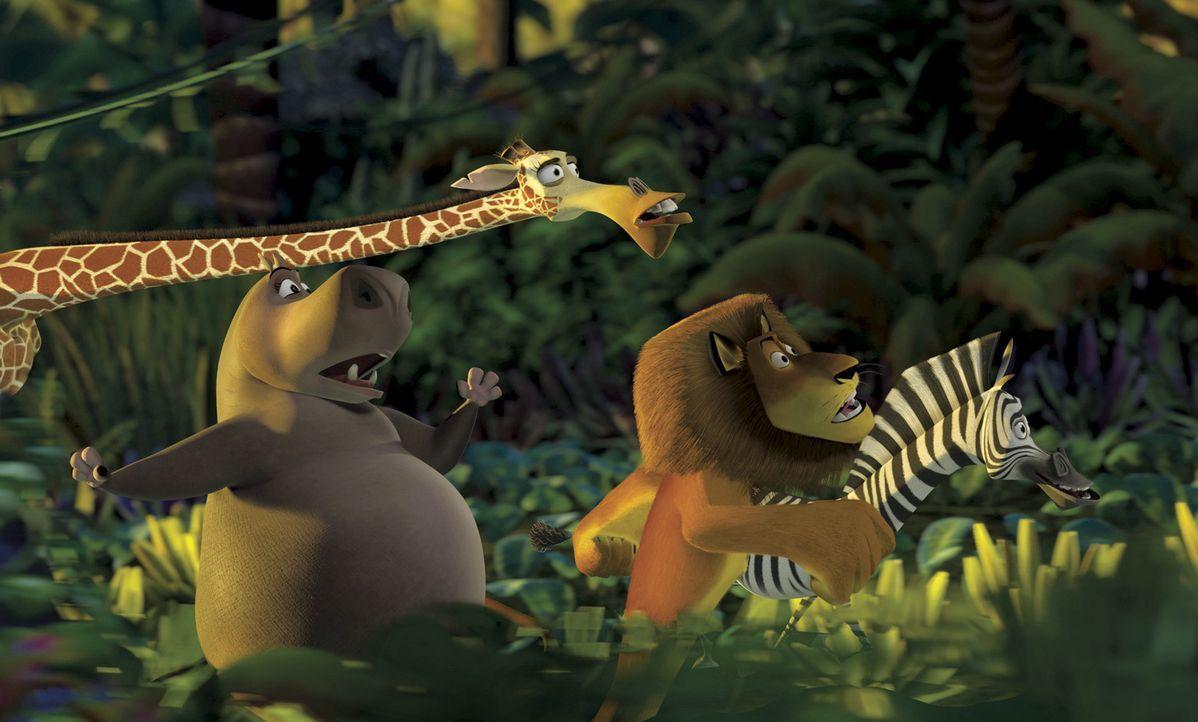 Im Zoo von New York führen Alex, der Löwe, das Zebra Marty, Melman, die Giraffe, und die Nilpferd-Dame Gloria ein beschauliches Leben. Doch als di... - Bildquelle: TM &   2004 DREAMWORKS ANIMATION SKG.