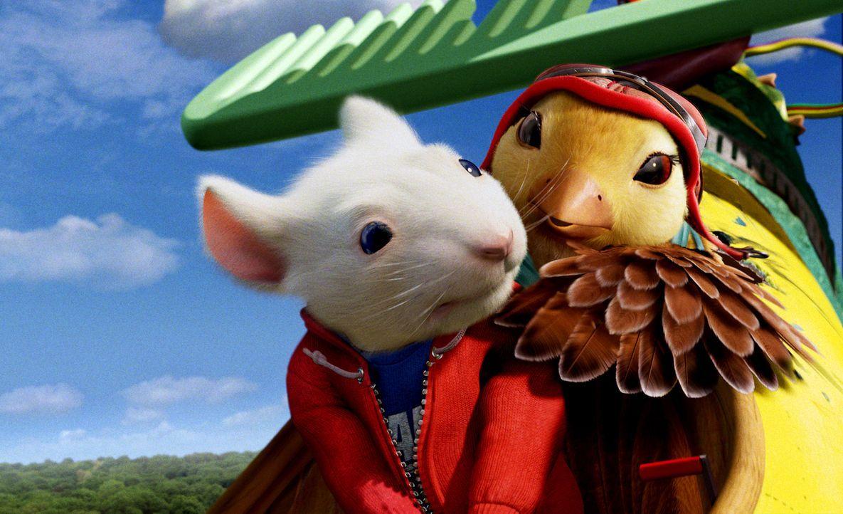 Stuart (l.) findet in dem süßen Vögelchen Margalo (r.) endlich eine neue Freundin, die in der Familie Little herzlich aufgenommen wird. Doch Margalo... - Bildquelle: 2003 Sony Pictures Television International. All Rights Reserved.