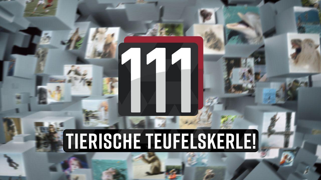 111 tierische Teufelskerle! - Logo - Bildquelle: SAT.1