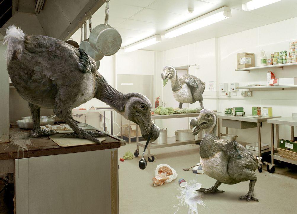 Tom und Duncan stoßen in einer Restaurantküche auf eine neue Anomalie des Raphus Cucullatus ... - Bildquelle: ITV Plc