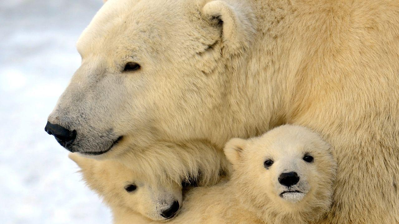 eisbaer-12-03-23-AFP - Bildquelle: AFP