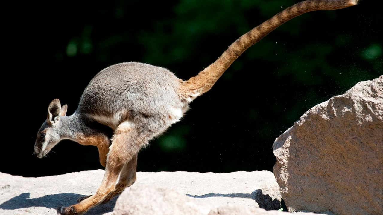 Känguru - Bildquelle: dpa