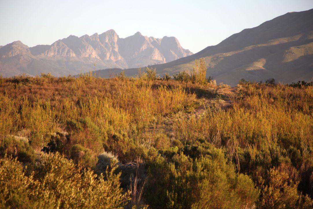 In einem wilden Land Hintergrund und Fakten9 - Bildquelle: Boris Guderjahn / SAT.1