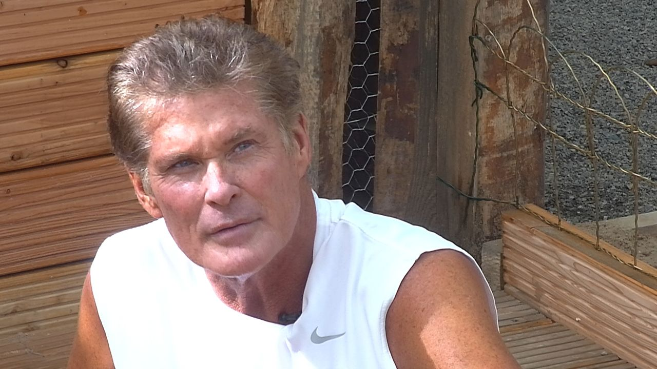 Tag2_The Hoff