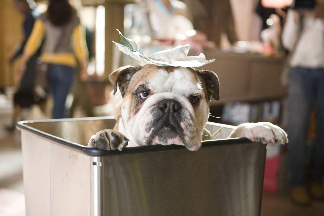 Fühlt sich im Hundehotel sauwohl ... - Bildquelle: MMVIII MavroCine Pictures GmbH & Co. KG All Rights Reserved.