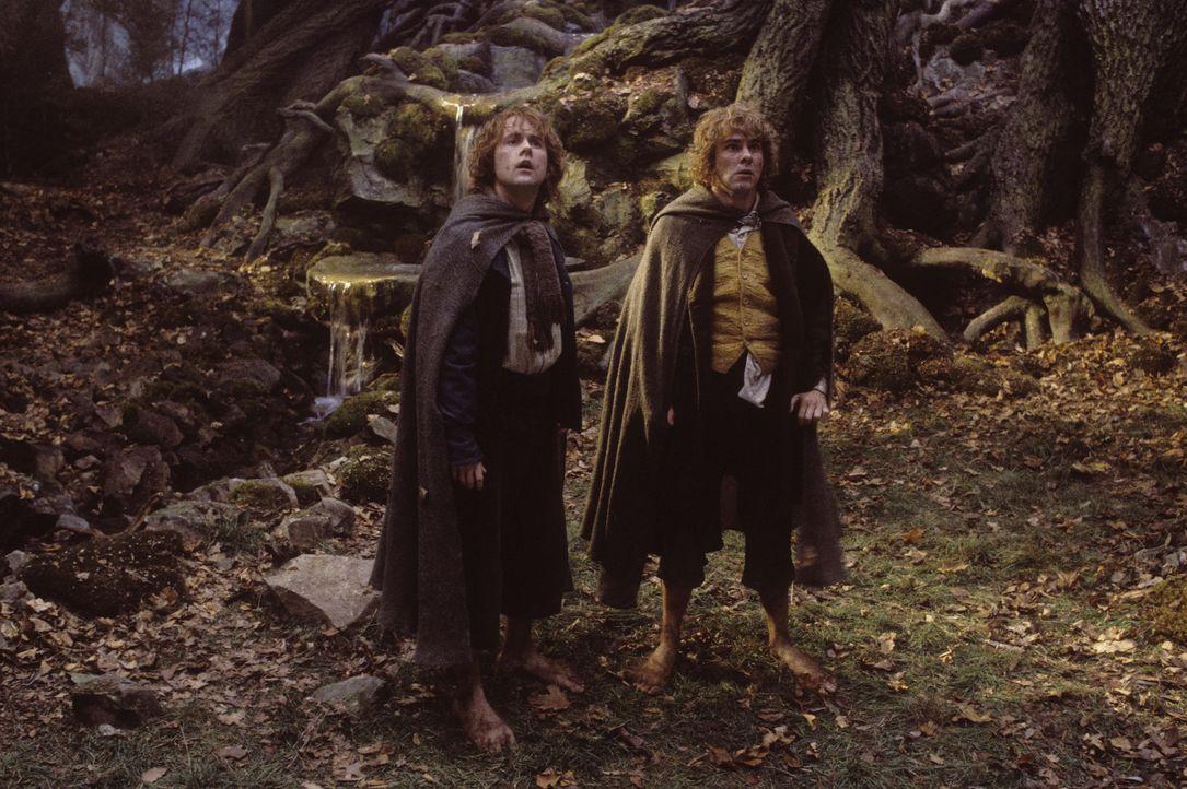 In den Wäldern von Emyn Muil treffen Sam (Sean Astin, r.) und Frodo (Elijah Wood, l.) auf den geheimnisvollen Gollum ... - Bildquelle: Warner Brothers
