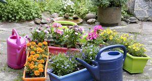 Ob Ton in Ton oder kunterbunt: Beim Bepflanzen der Blumenkästen kann jeder se...