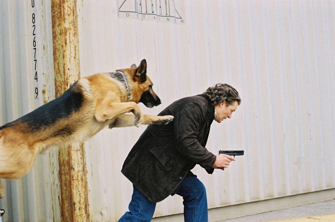 Rex gelingt es, Possling (Christoph Gareisen) zu stellen ... - Bildquelle: Sat.1