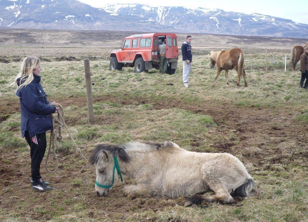 Auf Island sollen Danny (r.) und Jasmin (l.) lernen, was es bedeutet, Verantwortung zu übernehmen ... - Bildquelle: kabel eins