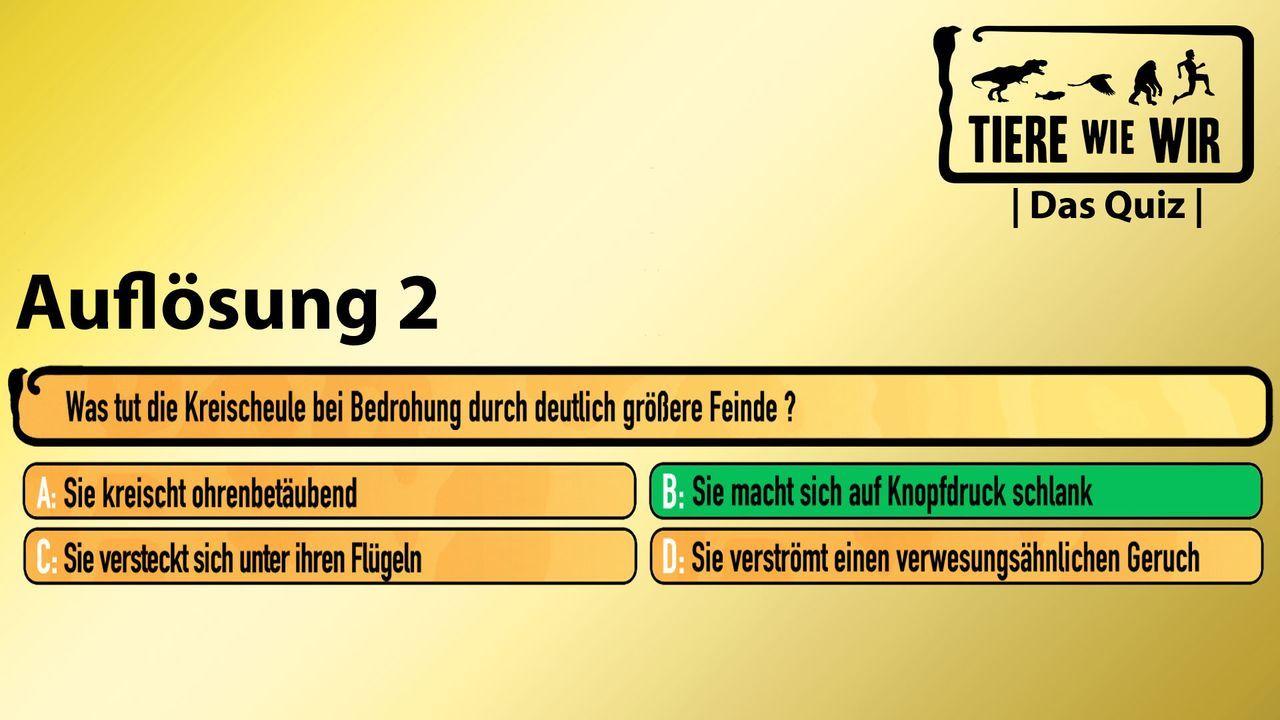 2_Auflösung_Kreischeule