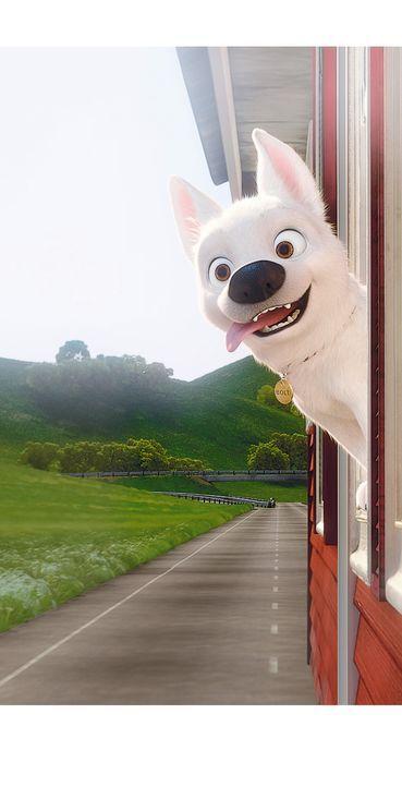 Bolt lernt die wirklich schönen Dinge des Lebens kennen ... - Bildquelle: Disney Enterprises, Inc.  All rights reserved