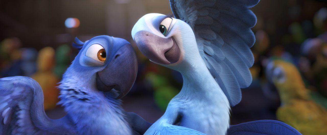 Blue (l.) und Jewel (r.) brechen zum größten Abenteuer ihres Lebens auf ... - Bildquelle: Blue Sky Studios 2011 Twentieth Century Fox Film Corporation. All rights reserved.