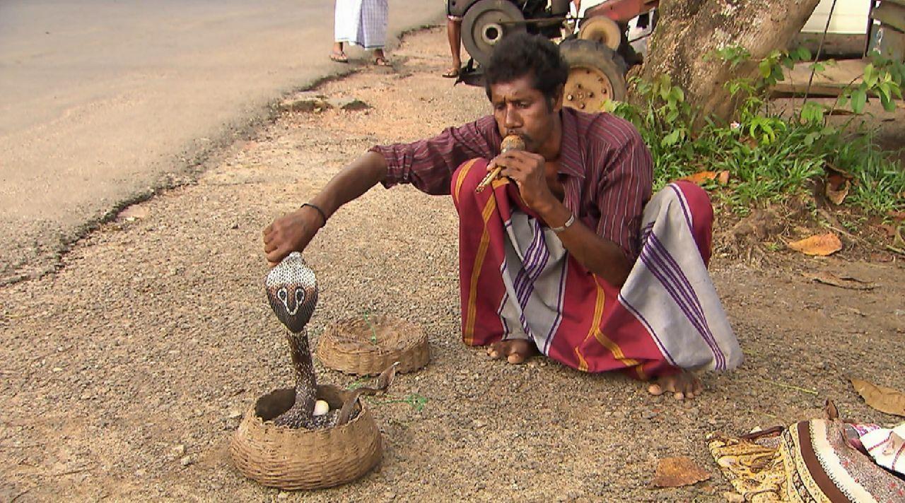 Bitte melde dich Staffel 2 Folge 1 Sri Lanka Schlange - Bildquelle: SAT.1