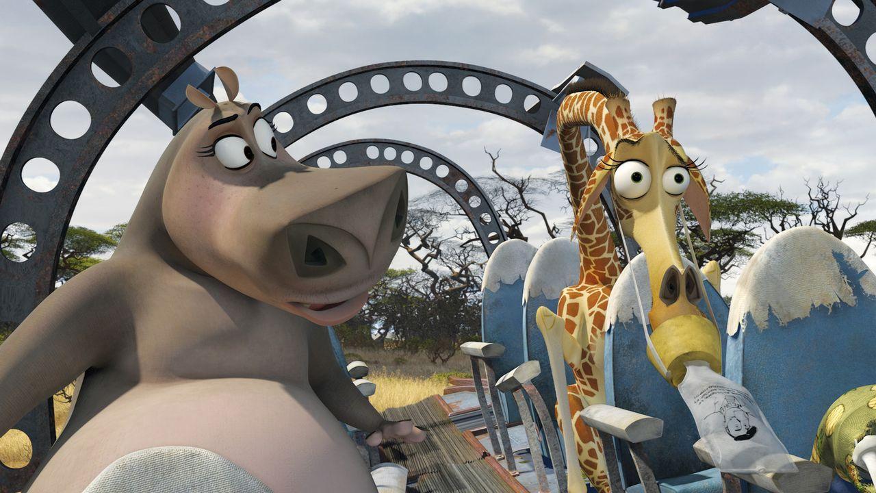 Nilpferd Gloria (l.) und Giraffe Melman (r.), wollen mit ihren Freunden Alex und Marty Madagascar verlassen und wieder nach New York in ihren Zoo zu... - Bildquelle: (2008) DREAMWORKS ANIMATION LLC. ALL RIGHTS RESERVED.