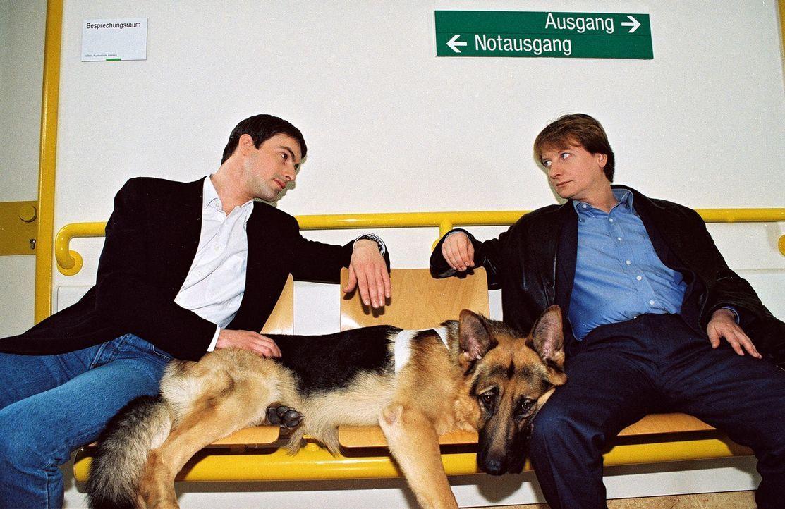 Kommissar Brandtner (Gedeon Burkhard, l.), Rex und Böck (Heinz Weixelbraun, r.) warten im Krankenhaus, um ein Verhör durchzuführen. - Bildquelle: Ali Schafler Sat.1
