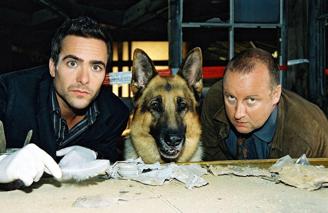 Marc (Alexander Pschill, l.), Rex und Kunz (Martin Weinek, r.) werden zu einer leer stehenden Fabrik gerufen. Dort wurde eine halbverkohlte Leiche g... - Bildquelle: Sat.1