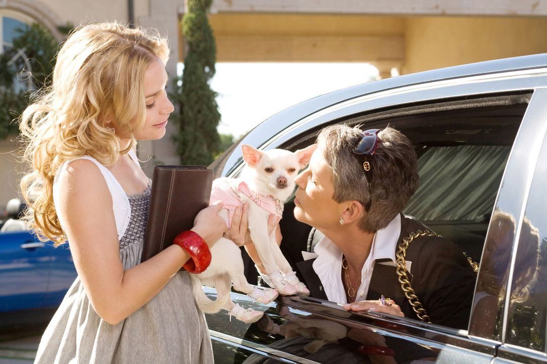 Chloe (M.) ist eine verwöhnte Chihuahua-Dame, die in Beverly Hills bei ihrer Besitzerin (Jaime Lee Curtis, r.) im Luxus lebt. Als diese plötzlich... - Bildquelle: Disney Enterprises, Inc.  All rights reserved