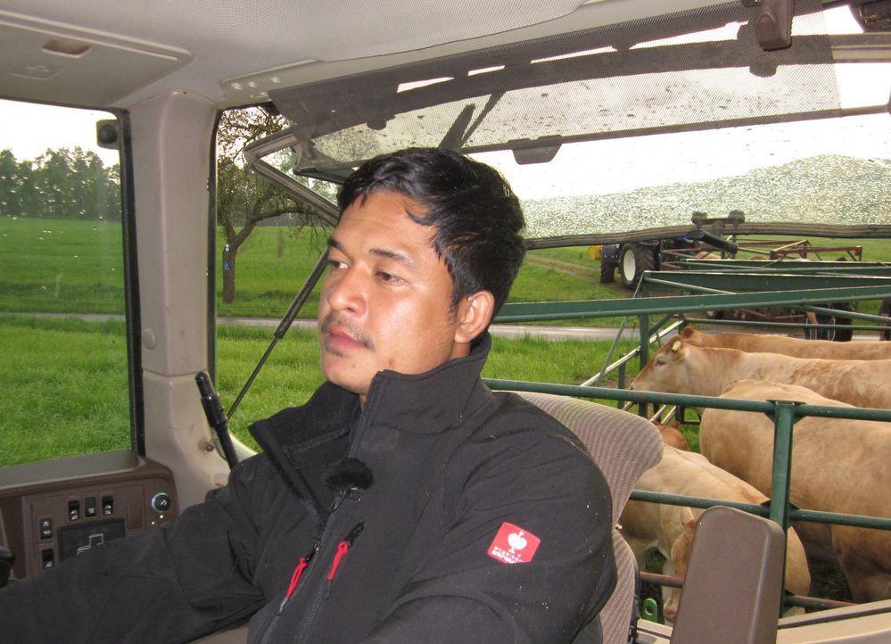 Der thailändische Bauer Kitt genießt vom Sitz eines 64PS starken Traktors die Aussicht auf die riesigen und kerzengerade angelegten Rapsfelder der... - Bildquelle: kabel eins
