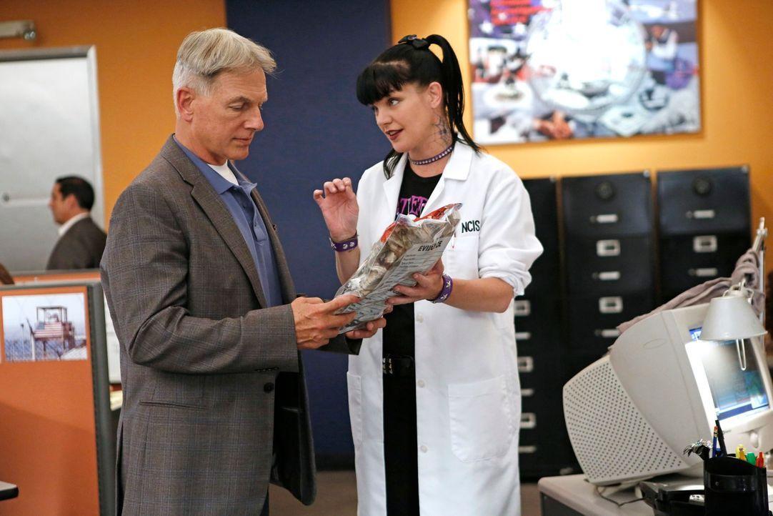"""Um einen neuen Fall zu lösen, setzen Gibbs (Mark Harmon, l.) und Abby (Pauley Perrette, r.) den Kurznachrichtendienst """"Twitter"""" ein ... - Bildquelle: CBS Television"""