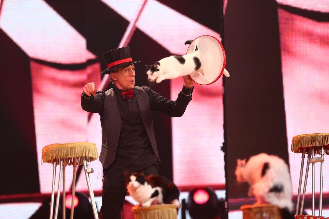 """Echte Showtalente: Die Katzen vom Popovich Comeday Cat Theatre beweisen akrobatische Künste bei der Talentschow """"Superpets"""". Sind die Kunststücke üb... - Bildquelle: Jens Hartmann SAT.1"""