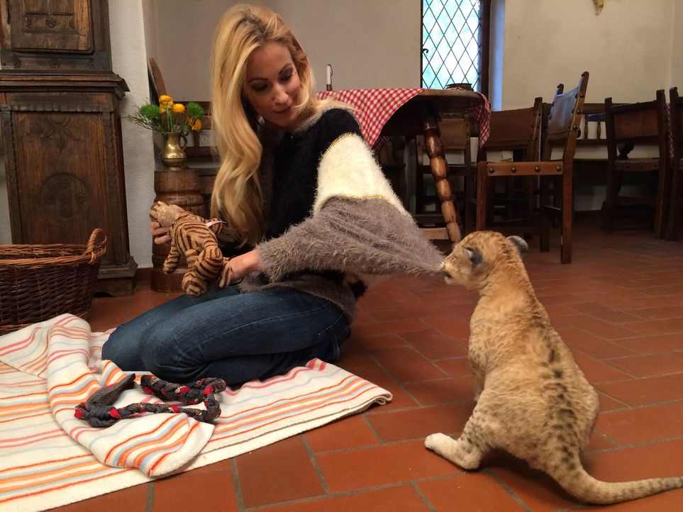 Andrea Kaiser besucht das 6 Wochen alte Löwenbaby Malor im Eifel-Zoo in Lünebach ... - Bildquelle: SAT.1