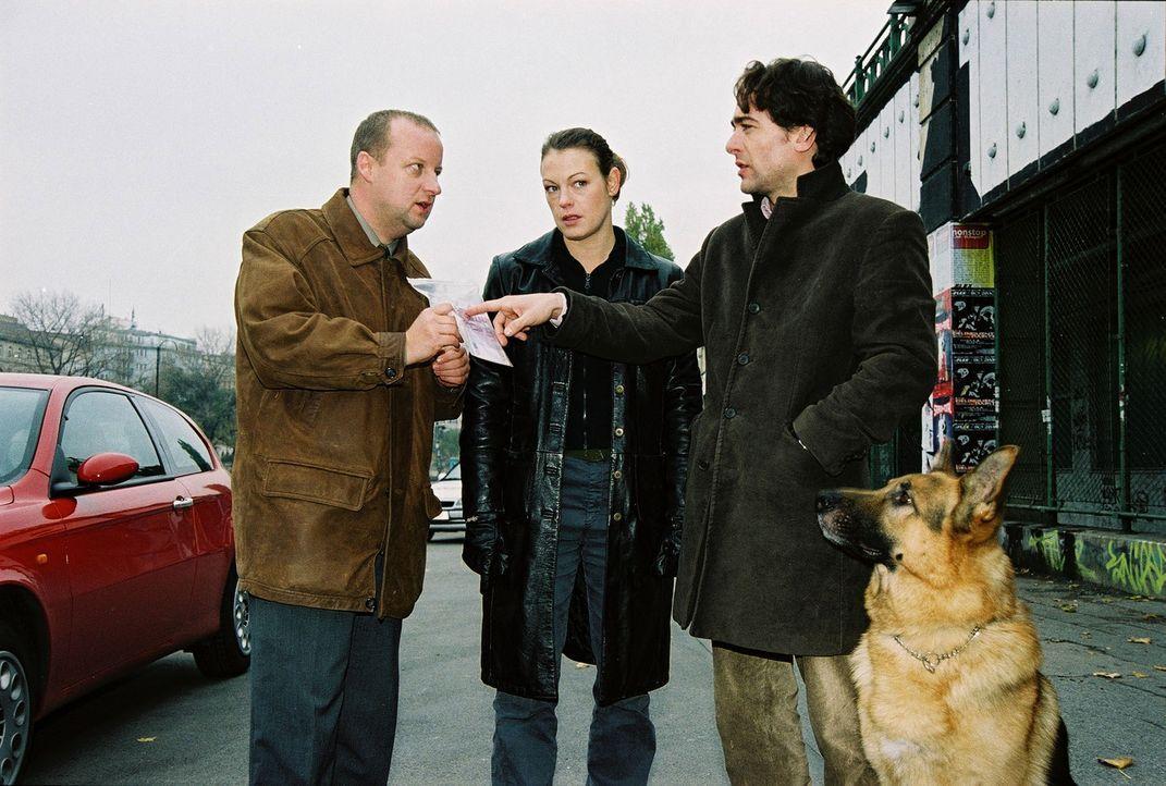 Fritz Kunz (Martin Weinek, l.), Niki (Elke Winkens, M.), Marc (Alexander Pschill, r.) und Rex sind zum Wiener Donaukanal gefahren. Dort wurde eine F... - Bildquelle: Sat.1