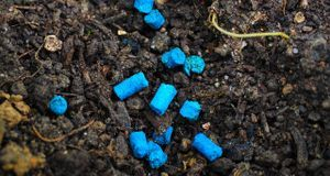 Gartengestaltung_2016_04_05_Schnecken bekämpfen_Bild 1_pixabay