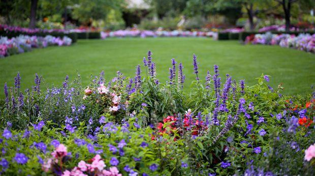 gartengestaltung pflegeleichte pflanzen pflegeleichter garten: tipps für hobby-gärtner   sat. ratgeber