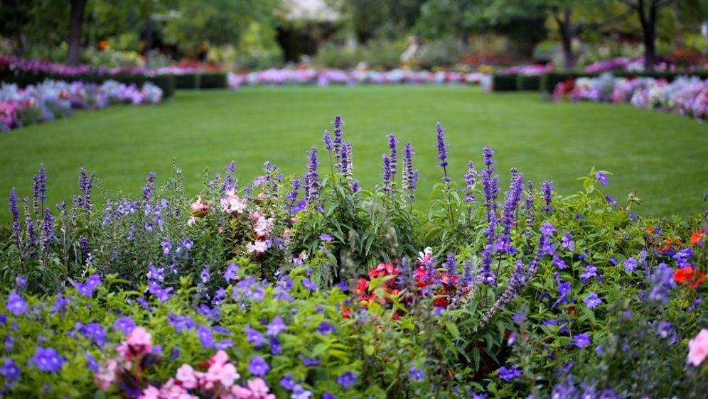 Pflegeleichter Garten Tipps Für Hobby Gärtner Sat1 Ratgeber
