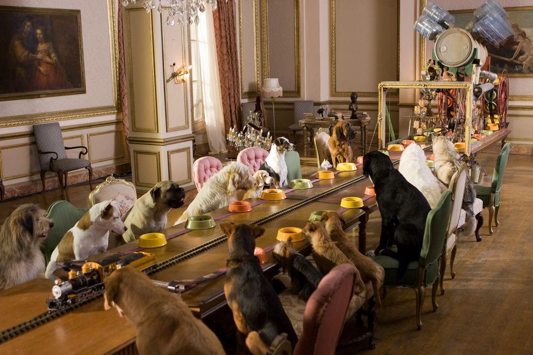 Schon bald schafft es der erfindungsreiche Tüfftler Bruce, den Hunden eine artgerechte und luxuriöse Umgebung zu schaffen. Doch dann rufen die bel... - Bildquelle: MMVIII MavroCine Pictures GmbH & Co. KG All Rights Reserved.