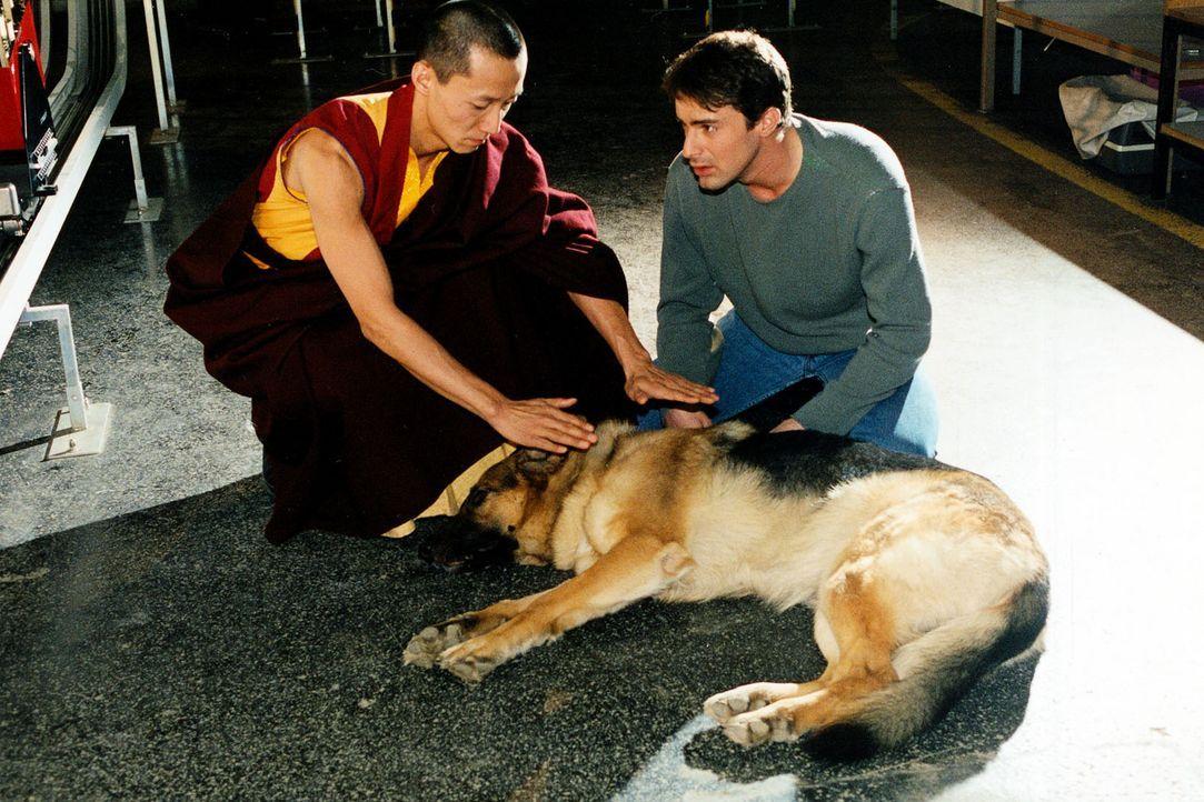 Als Kommissar Brandtner (Gedeon Burkhard, r.) dem geheimnisumwitterten Rezept auf die Spur kommt, gerät Rex in Lebensgefahr. Der tibetische Mönch... - Bildquelle: Sat.1